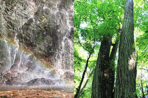 鹿の子沢(虹の滝・三本桂)